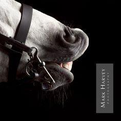 Sniff by Mark Harvey  Horse, Art, Commercial Photography, Character, Uk Horse Photographer, Refined Equine Portraiture.