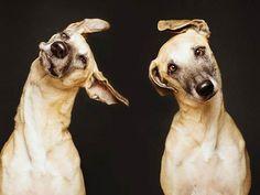dogs-elke-vogelsang-14