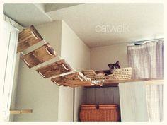 いつか作ってみたい自作キャットウォークの事例10選 | ネコモノ帳