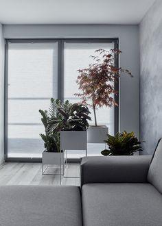 Apartment in Facsemete Street - Street, Plants, Plant, Walkway, Planets