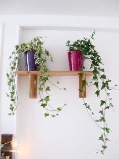 House plants. Not sure about the link but the pic is cool.
