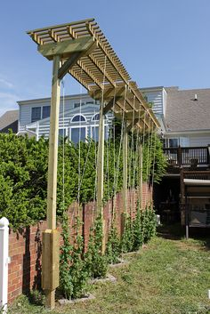 Hop arbor - the bines are strung up!