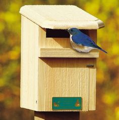 Blue Bird Feeder Diy For Mealworms Handmade Using A