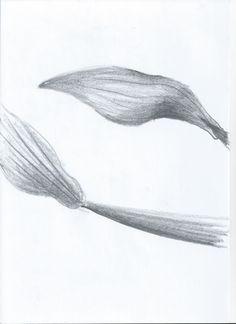 Sketch_Kelp20