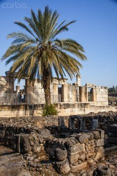 Capernaum, on the northern shores of the Sea-of-Galilee, is a place of miracles and healings