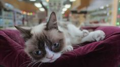 Grumpy Cat's Worst Christmas Ever: No One Wants Grumpy Cat