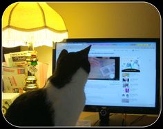 Buster watching youtube.