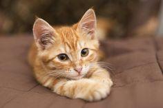 chaton adorable Mon chat urine partout: que faire?