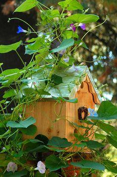 morning glory covered birdhouse