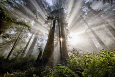 Hope by Sapna Reddy | Earth Shots Damnation Creek Trail in Redwood National Forest, California
