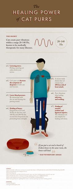the-healing-power-of-cat-purrs