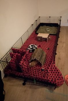 Girls Home 2 - Guinea Pig Cage Photos