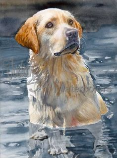 Bailey is an Open Edition Giclee Art Print from a watercolor featuring a Yellow Labrador Retriever. The Lab is widely considered the most popular dog