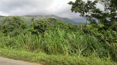 Heading for the mountain range in the Volta Region, Ghana West Africa