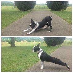 downward-facing dog, upward-facing dog good yoga inspiration : )