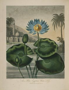 New illustration of the sexual system of Carolus von Linnaeus.  London : 1807..  biodiversitylibrary.org/page/307110