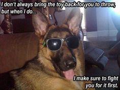 Wicked Training Your German Shepherd Dog Ideas. Mind Blowing Training Your German Shepherd Dog Ideas. Puppy Classes, Dog Training Classes, Training Your Dog, Training Videos, Dachshund Funny, Funny Dogs, Funny Memes, Dog Memes, Funny Horses