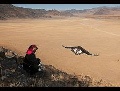 Kazakh eagle hunter sends out his golden eagle to fly in the Altai Region of Bayan-Ölgii in Western Mongolia by jitenshaman, via Flickr