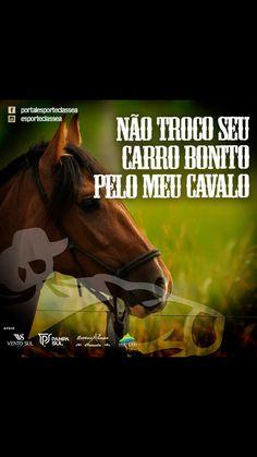 58 Melhores Imagens De Frases Com Fotos De Cavalos