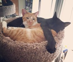 #whatthe? How did you find us up here???? #catsrock #blackcatsarebeautiful #prettytabby #catsofinstagram #instacats #kittiesofinstagram #blackcatsofinstagram
