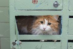 Cat home by dashabelozerova on @creativemarket