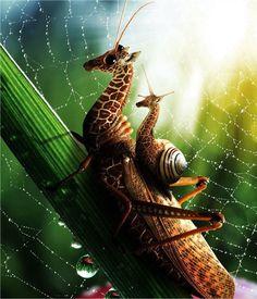 Giraffehopper rides anyone?