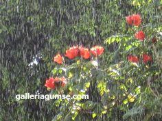 Linkki: www.galleriagumse.com/taulut/fresh-rain/ Rain, Fresh, Plants, Rain Fall, Plant, Waterfall, Planets