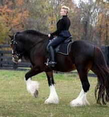 I would dearly love a Shire Horse like this - huge and gorgeous. They have fabulous temperaments.