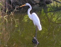 Story of a crane : A motivational story Danube Delta, White Crane, Crane Bird, Motivational Stories, Bird Wallpaper, Birds 2, Meeting New People, Romania, Wildlife