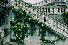 blossomed onto the side of the marble staircase, growing up and teasing the handrail.They blossomed onto the side of the marble staircase, growing up and teasing the handrail. Narnia, Marble Staircase, Staircase Handrail, Carpe Koi, Slytherin Aesthetic, Interior Exterior, Dragon Age, Fairy Tales, Final Fantasy