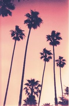 Palm trees #TravelBright #Asos