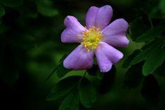 Springtime flower - Macro photography