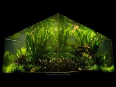 Nature's Chaos Transformed into a Jungle Aquascape by James Findley - YouTube
