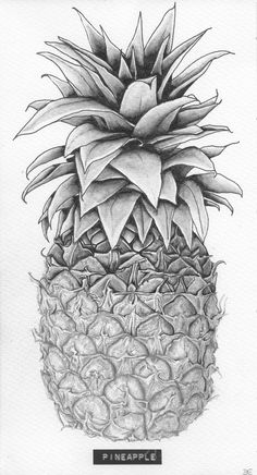 Pineapple Drawing | Title: 'Pineapple' Client: SLA Type: drawing / tattoo design ...