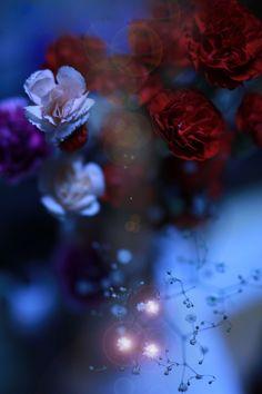 #fleurs #blue #red #grey