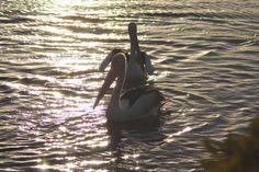 Pelikanen bij zonsondergang
