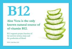 Tiredness Remedies Aloe Vera ,Source of Vitamin B 12 - is this true? Have not seen it listed as a source on anything else? Sources Of B12, Sources Of Vitamin B, Vitamin A, Vitamin B 12 Foods, Clean9, Vitamine B12, Fruit Juice Recipes, Smoothie Recipes, Forever Living Products