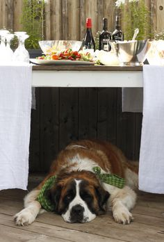 Saint Bernard, who can resist these big slobbery  faces!?