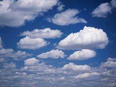 Птицы, полёт, облака