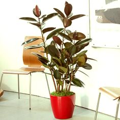 Indoor Plants Online At Nursery Live