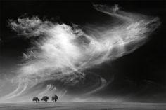 Photoshop-Composing aus Himmel und Wolken, Getreidefeld und einzelnen Bäumen, Motiv aus meiner Bilderserie »Dramatischer Himmel«, unterschiedliche Wetter-, Himmels- und Wolkenerscheinungen werden in Photoshop-Composings in die stets gleiche minimalistische Landschaft integriert.   Ein herzliches Dankeschön an ALLE die sich am Voting beteiligt haben!  Ich freue mich riesig !!!