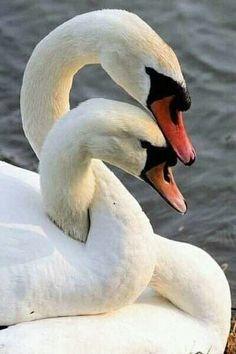 Beautiful birds, ,abstract birds, birds, bird k… – Animal Planet Love Birds, Beautiful Birds, Animals Beautiful, Swans, Animals And Pets, Cute Animals, Animals Photos, Wild Animals, Bird Kite