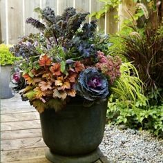 Fall gardening: Ornamental kale and cabbage planter