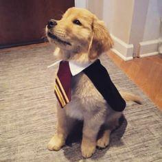 Harry Potter dogs ⚡️
