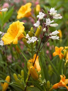 Mix Flower Shapes Add interest to your summer garden by mixing flowers with different shapes together. For example, here the wide, trumpet-shape blooms of 'Stella d Oro' daylily mingle beautifully with the dainty white flower stalks of 'Husker Red' penstemon. The result looks like a living bouquet.