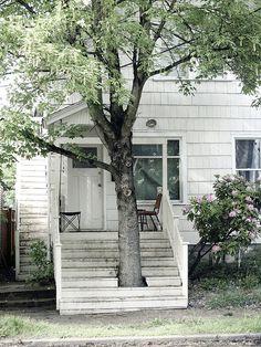 respect for a tree (Portland - Oregon)