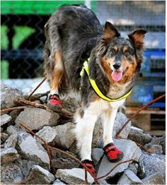 Searching through the rubble 9/11 Dogs are mans best friend.