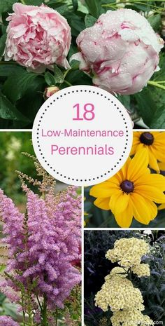 These 18 low maintenance perennials make flower gardening so easy. They're perfect for beginners and for beautifying your yard with minimal effort! # Gardening for beginners 18 Low Maintenance Perennials Flowers Perennials, Planting Flowers, Flower Gardening, Flowers Garden, Perrenial Flowers, Long Blooming Perennials, Flower Garden Plans, Peonies Garden, Shade Perennials