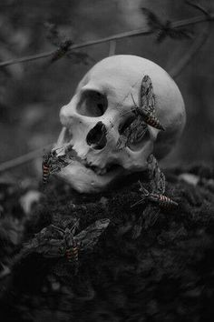 SKulls.......Eerie | Creepy | Surreal | Uncanny | Strange | 不気味 | Mystérieux | Strano |