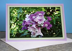 GARLIC VINE (Cydista-Aequinoctialis)Fine Art 5x7.5 inch Photo Greeting Note Card W/Envelope and Cellophane Sleeve, color Purples Green